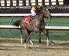 SIGNALMAN - The Kentucky Jockey Club G2 - 92nd Running - 11-24-18 - R11 - CD - Finish 02.jpg