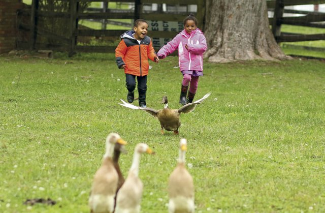 Children chase ducks at SlakMarket Farm during the Black Soil Farm Tour and Farm to Table Dinner in Lexington.jpg