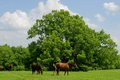 Briarbrooke-2392-Edit.jpg