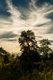 GriffithKingnut_HDR2.jpg