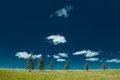 Iowa Lonesome Pines (solarized).jpg