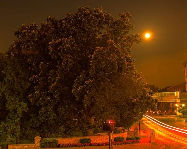 Moon Trees-0867-Edit.jpg