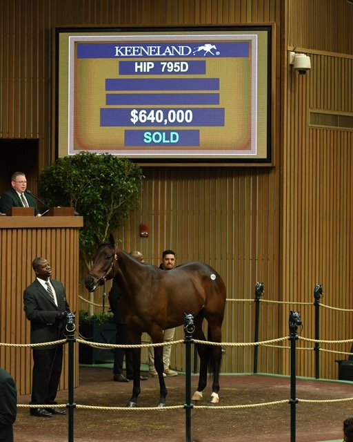 $640,000 January Sale top-priced horse, Enaya Alrabb.jpeg