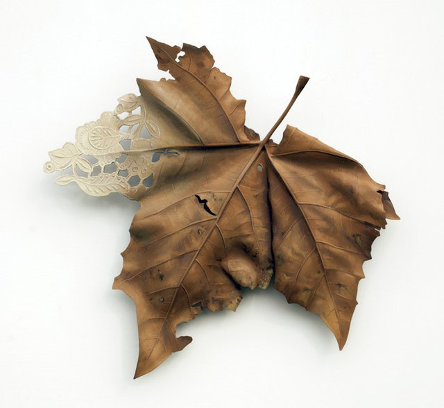 "Leaf_""Domestication Series- Sycamore,"" 2019..jpg"