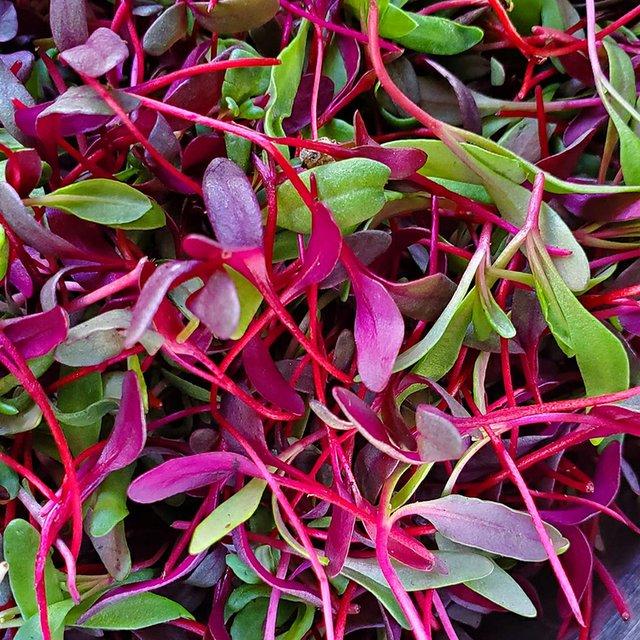 Simply Seedlings_4.jpg