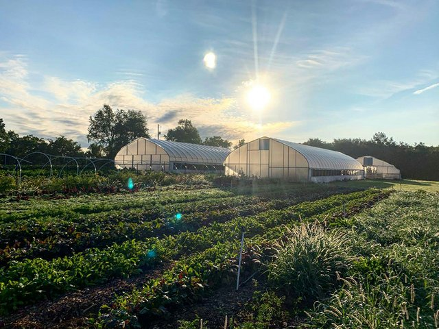 Salad Days Farm_5.jpg