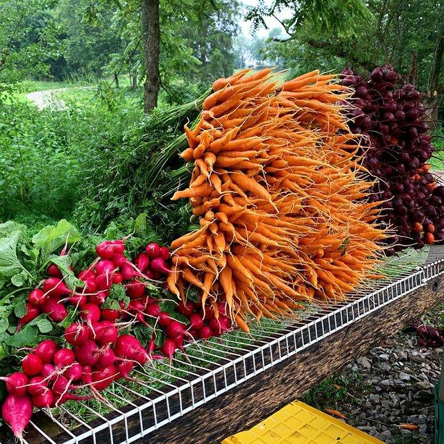 Salad Days Farm_3.jpg