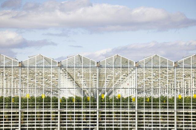 AppHarvest_Morehead facility.jpg