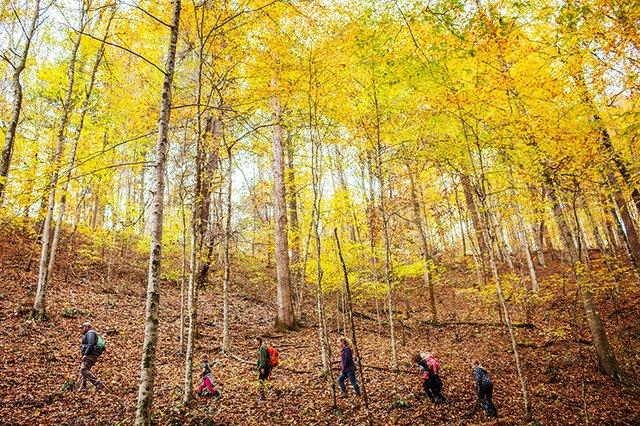Red Oaks Forest School_14.jpg