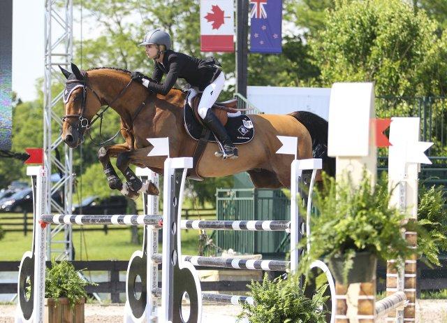 sport horse jump.jpg