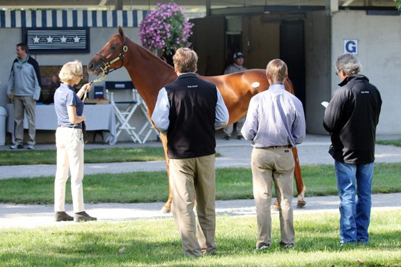 Fasig-Tipton Turf Sale 2017-featured.JPG
