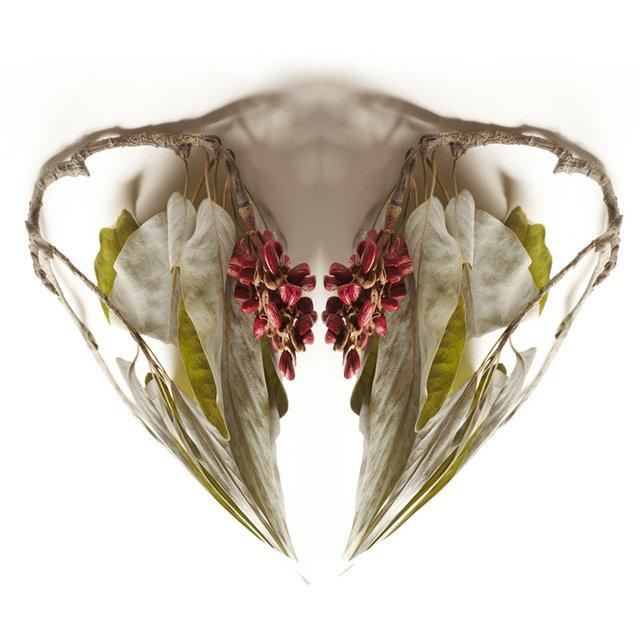 Rezny Gallery_November_Holiday Revels_M Rezny_Shadow Magnolia.jpg