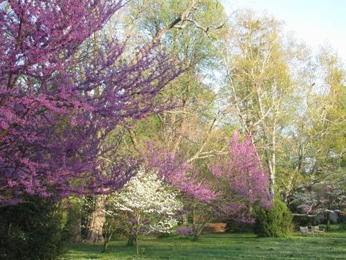 ashlandtrees