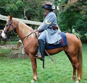 ashlandhorse
