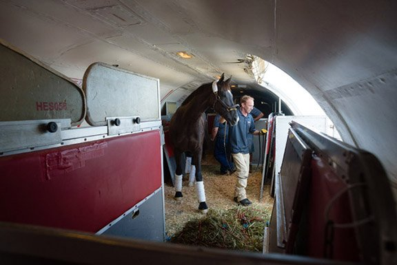 Air Horse One: Elite equines fly first class on this Lexington-based