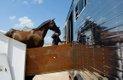 Equine Transport4.jpg