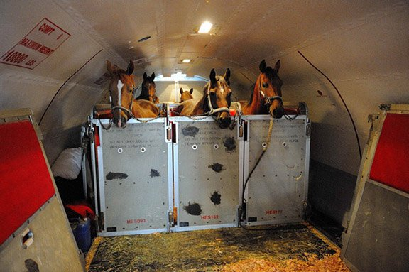 Equine Transport9.jpg