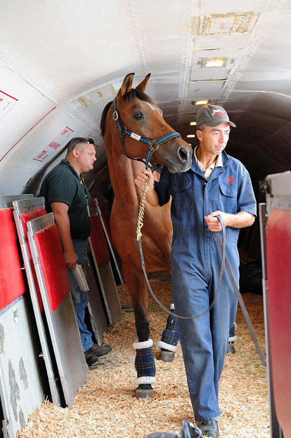 Equine Transport8.jpg