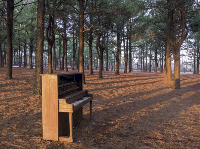 Abandoned piano in trees a copy.jpg