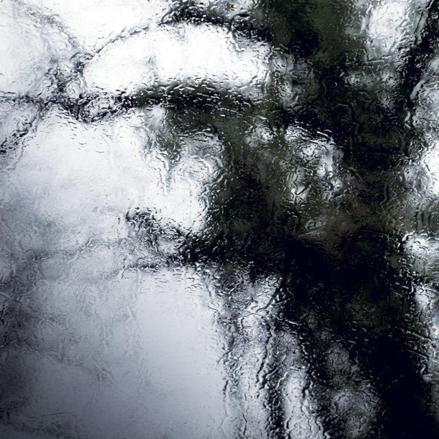 Black Walnut Third Stree W copy.jpg