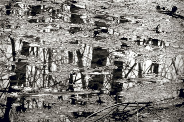 Tree Reflection under Ice  copy.jpg