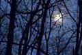 trees in moonlight McConne copy.jpg