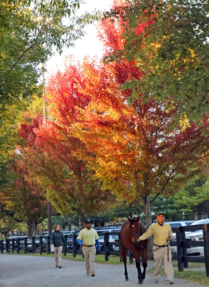 Fasig-Tipton Yearling Sale 2018 scenic.jpg
